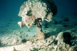 Half Of Great Barrier Reef Lost Over Past 27 Years, More To Come | Good night, sweet fingerprints. | Scoop.it