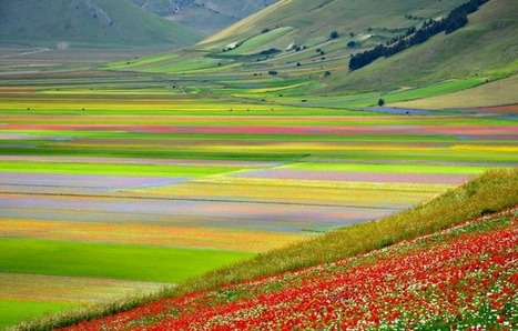 Follow the blooming in Castelluccio di Norcia in the Sibillini Park | Italia Mia | Scoop.it