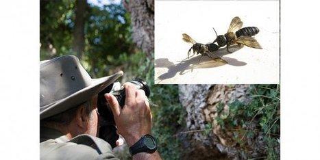 Un appareil photo, un nécessaire d'entomologiste, et c'est parti ! | Variétés entomologiques | Scoop.it