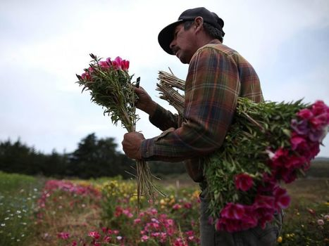 Valentine's Day 2015: Where Your Flowers Come From | AP HUMAN GEOGRAPHY DIGITAL  STUDY: MIKE BUSARELLO | Scoop.it