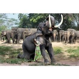 One Hour Trekking at Pattaya Elephant Village | Discover amazing Thailand | Scoop.it