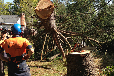 Tree Stump Removal | Tree Removal Service | Scoop.it
