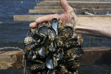ESPRESSO – La côte de l'Oregon polluée à la caféine   Toxique, soyons vigilant !   Scoop.it