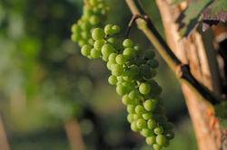 InVivo veut devenir un champion du vin   Le vin quotidien   Scoop.it