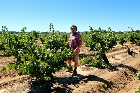 Sonoma's Morgan Twain-Peterson talks about his new Katusha Vineyard in Lodi « Lodi Wine | Memoirs of a Chonga | Scoop.it
