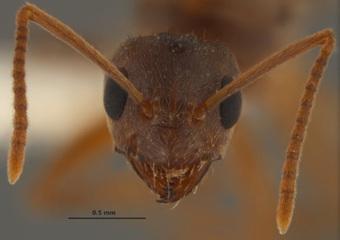 La fourmi dévoreuse d'électronique | Remembering tomorrow | Scoop.it