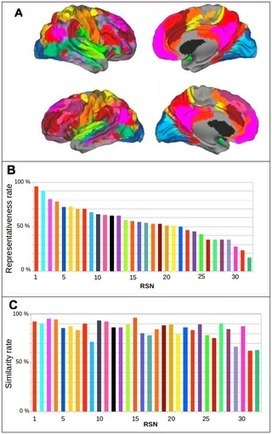 Resting State Networks' Corticotopy: The Dual Intertwined Rings Architecture | Social Foraging | Scoop.it