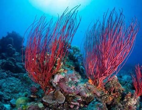El mapa mundial del plancton marino | Natura | Agua | Scoop.it