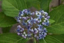 Harvard halla los secretos moleculares de un remedio herbal con más de 2.000 años de antigüedad   salud equilibrio   Scoop.it