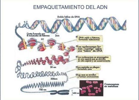 El marcador epigénetico y el cáncer | Novedades Cientificas y Médicas | Scoop.it