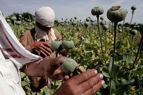 Just Say No (to Afghan Counternarcotic Efforts) | Drugs, Society, Human Rights & Justice | Scoop.it