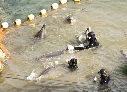 Why don't dolphins fight back? | Environmental Crime - Delitos ambientales | Scoop.it