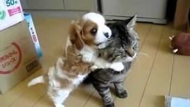 Un petit chien embête un chat ! | Vidéos de chats ! | CaniCatNews-actualité | Scoop.it