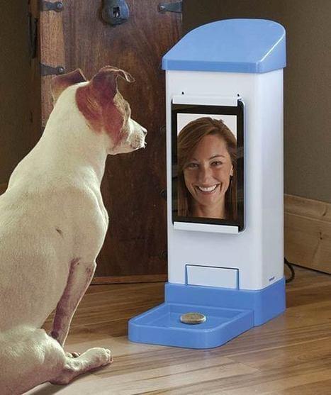 iCPooch – Discuter sur Skype avec votre chien ?   Un peu de tout et de rien ...   Scoop.it
