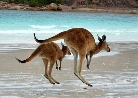 Travel Australia, and Make Money doing it! | World Insider | World Insider Blog | Scoop.it