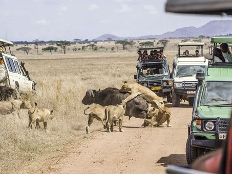 'Epidemic of ignorance': Tourists avoid Africa, all of it | Mrs. Watson's Class | Scoop.it