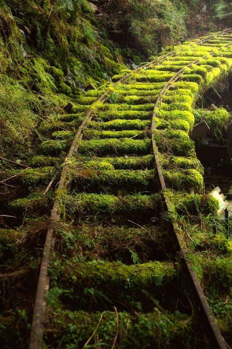 The mossy railway byHanson Mao(毛延延) | My Photo | Scoop.it