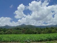(en foto) Cultivo del ajonjolí en Santiago de Cuba | cuba ciencia | Scoop.it