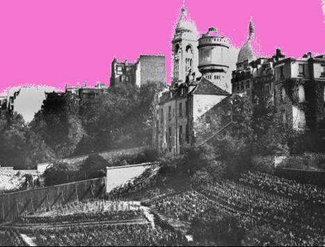 Les vignes du Clos Montmartre, en route vers la qualité ? | Wine and the City - www.wineandthecity.fr | Scoop.it
