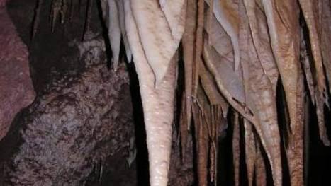 A Living Desert Underground | ScienceNewsline | CALS in the News | Scoop.it