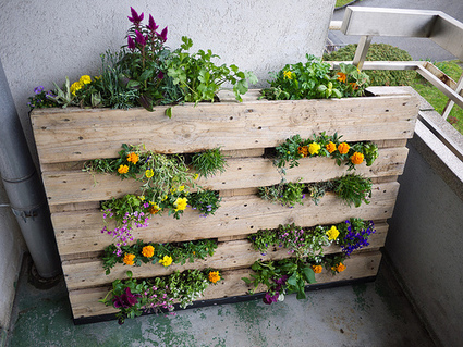 Downshifting ecosostenibile: Pallet in giardino | Craft and other ideas | Scoop.it