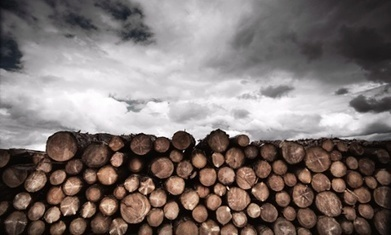 Why deforestation-free claims might not stop forest clearance | GarryRogers Biosphere News | Scoop.it