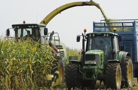 L'impressionnante chute des cours du maïs - BFMTV.COM | VENDRESONBLE | Scoop.it