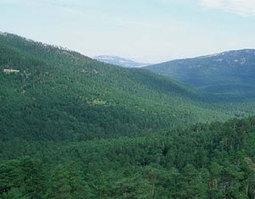 Defensa de las directivas europeas que protegen la naturaleza - Actualidad Medio Ambiente | Actualidad forestal cerca de ti | Scoop.it