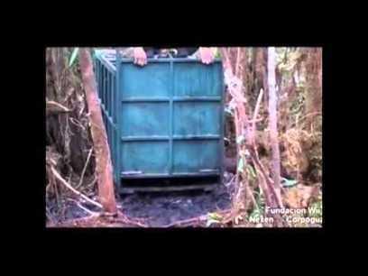 El Oso de Anteojos (Tremarctos ornatus) | Agua | Scoop.it
