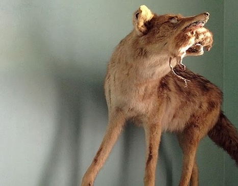 See Kansas | Sand Island | Taxidermy anthropology | Scoop.it