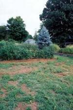 8 Steps for How to Make Better Garden Soil | Pasture raised, Grass fed Pigs | Scoop.it