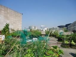 Bruxelles Insolite: un potager sur le toit de la Bibliothèque Royale | Jardins urbains | Scoop.it