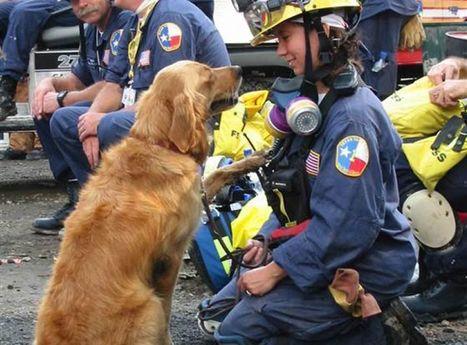 Bretagne, le dernier chien vivant des services du 11-Septembre, a fêté ses 16 ans | CaniCatNews-actualité | Scoop.it