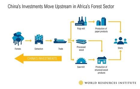 How Does China's Growing Overseas Investment Affect Africa's Forests? | Identités de l'Empire du Milieu | La Chine vue par la géographie | Scoop.it