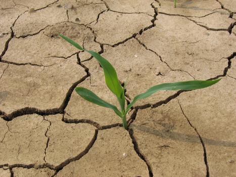 Klimagutachten - Ökobranche in Aufregung | Agrarforschung | Scoop.it