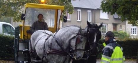 Des chevaux pour remplacer les camions à Alençon ...??? | Les transports urbains | Scoop.it