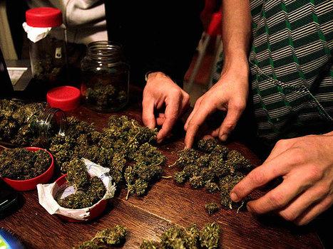 Nueva marihuana es cinco veces más nociva y potente - InfoBAE.com | thc barcelona | Scoop.it