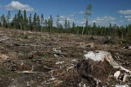 10 Interesting Deforestation Facts   The environmental problems   Scoop.it