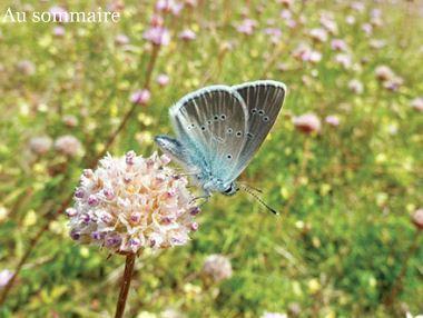 Le numéro 12 d'Espèces revue d'histoire naturelle vient de paraître   Variétés entomologiques   Scoop.it