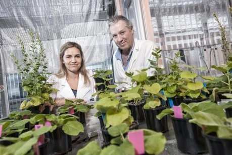 'Magic' plant discovery could lead to growing food in space: Scientists have discovered gene that will open the door for space-based food production | Vertical Farm - Food Factory | Scoop.it