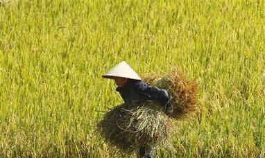 FAO: No food crisis yet as grain prices soar | Food Security | Scoop.it