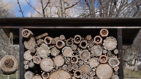 Oslo builds its bees a highway of flowers | GarryRogers NatCon News | Scoop.it