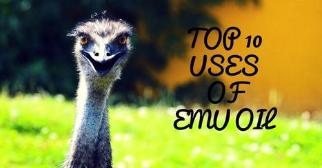Top 10 Uses and Benefits of Emu Oil - Emu Oil For Skin, Hair and Body | Health Tips by HNBT healthnbodytips-com | Scoop.it