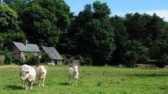 DIAPORAMA : paysages de clos-masures du côté de Saint-Martin-aux-Buneaux - France 3 Haute-Normandie | MaisonNet | Scoop.it