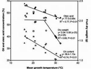L'effetto della temperatura su qualità e quantità dell'olio nelle olive - TeatroNaturale.It | Olio Extravergine Italiano Costa | Scoop.it