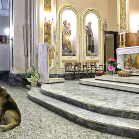 Loyal dog continues to attend mass at church where owner's funeral was held | Veterinary News | Scoop.it