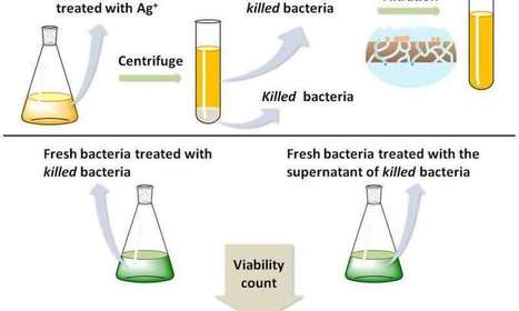 'Zombie' bacteria found able to kill other bacteria | News we like | Scoop.it