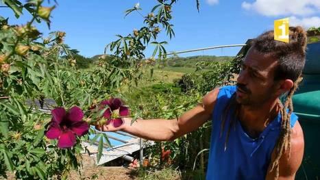 Sous un climat aride, il cultive un jardin extraordinaire. Vive la permaculture ! (VIDÉO) | agriculture | Scoop.it