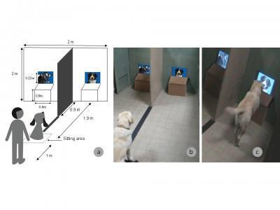 Dogs spot dogs: Dogs recognize the dog species among several other species on a computer screen | Amazing Science | Scoop.it