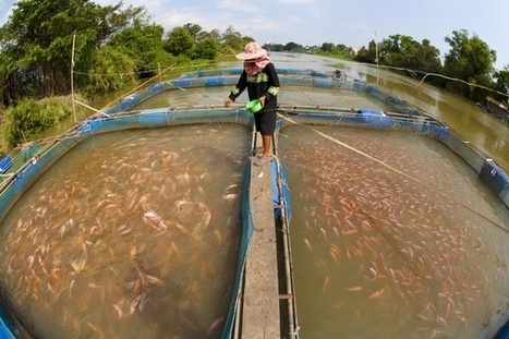 Coordinated efforts in aquaculture needed to meet global demand - eco-business.com | Healthy Recipes and Tips for Healthy Living | Scoop.it